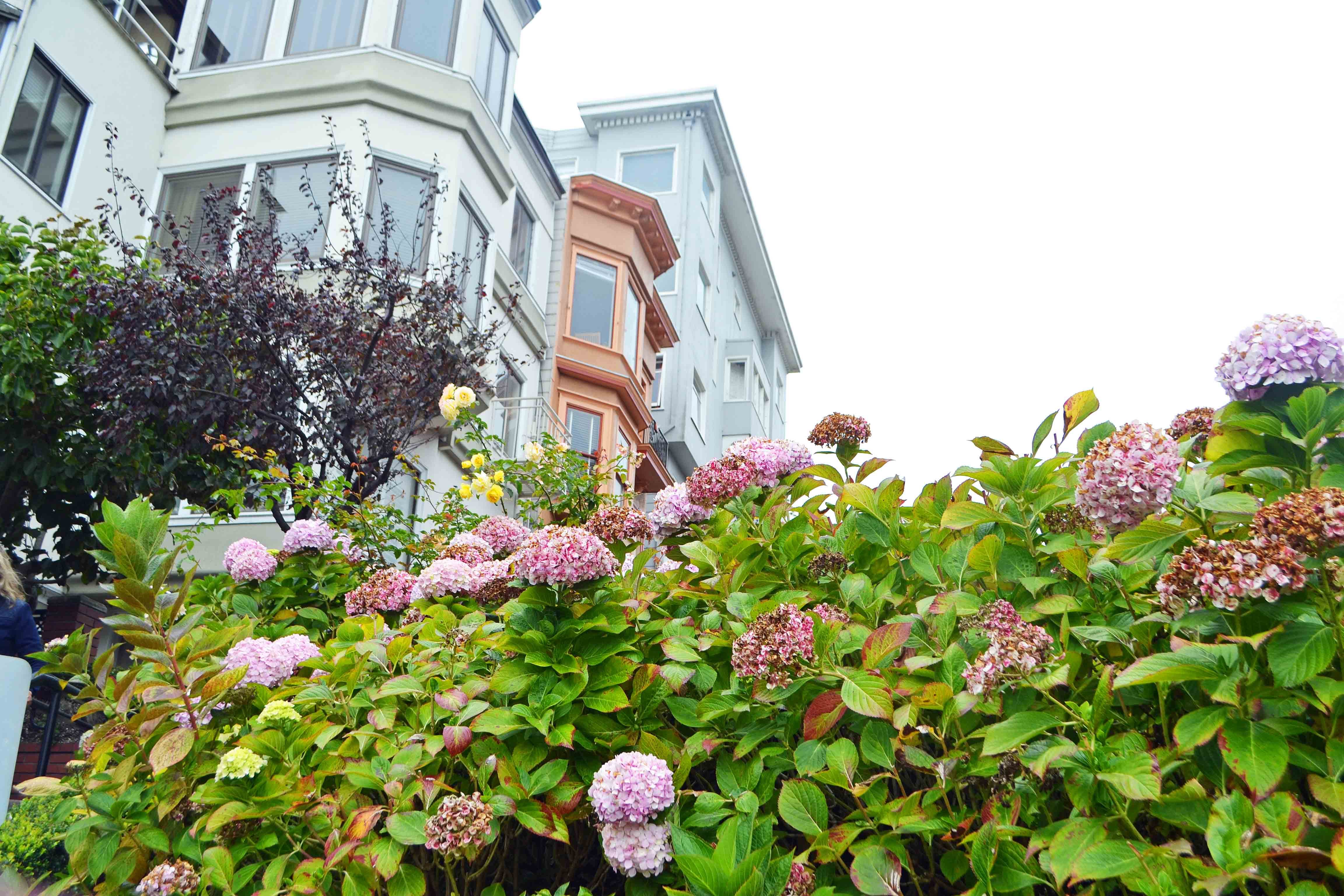 California Pacific Coast Highway 1 Road Trip Guide - San Francisco Lombard Street