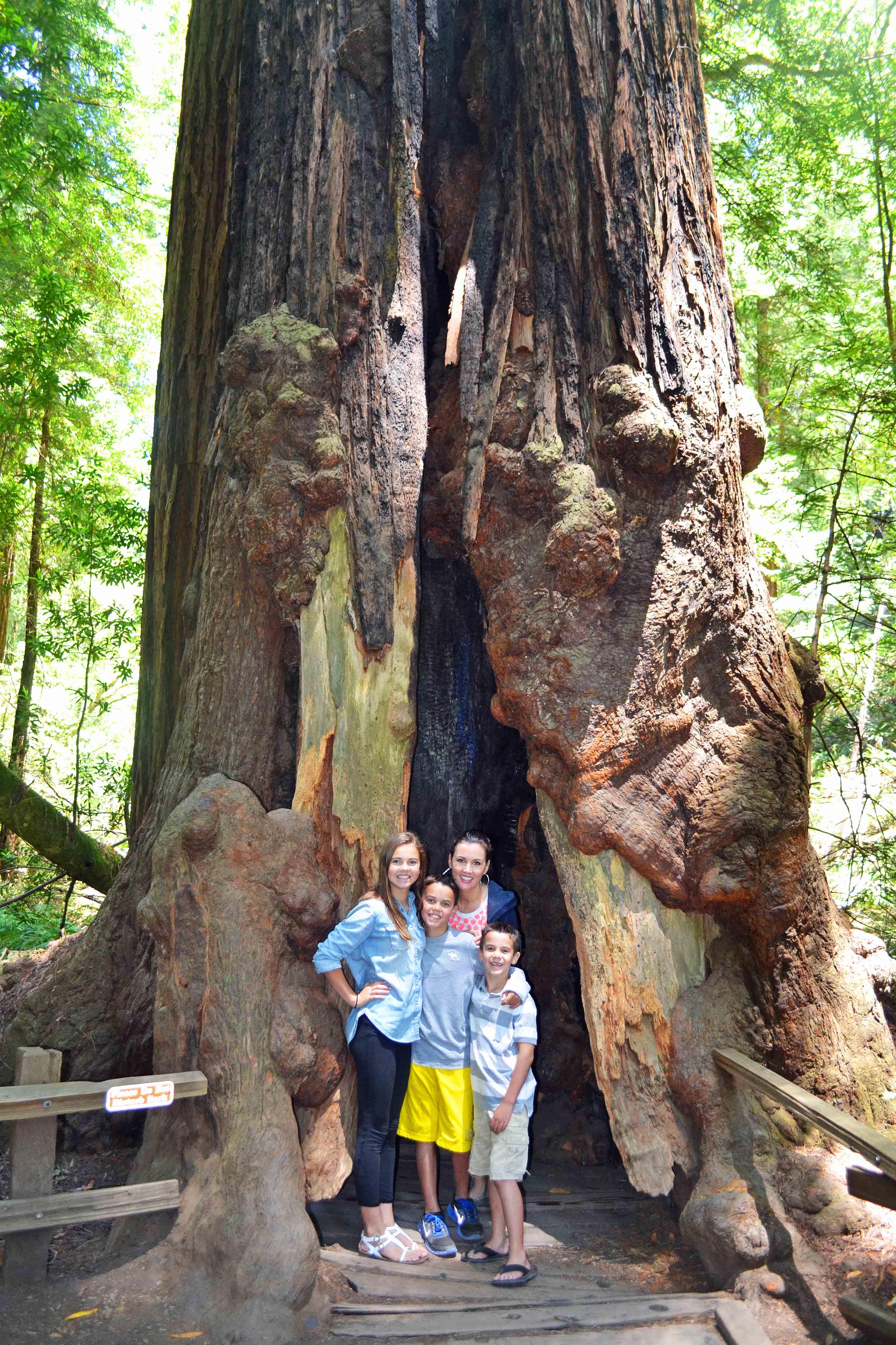 Muir Woods California Pacific Highway 1 Road Trip Guide