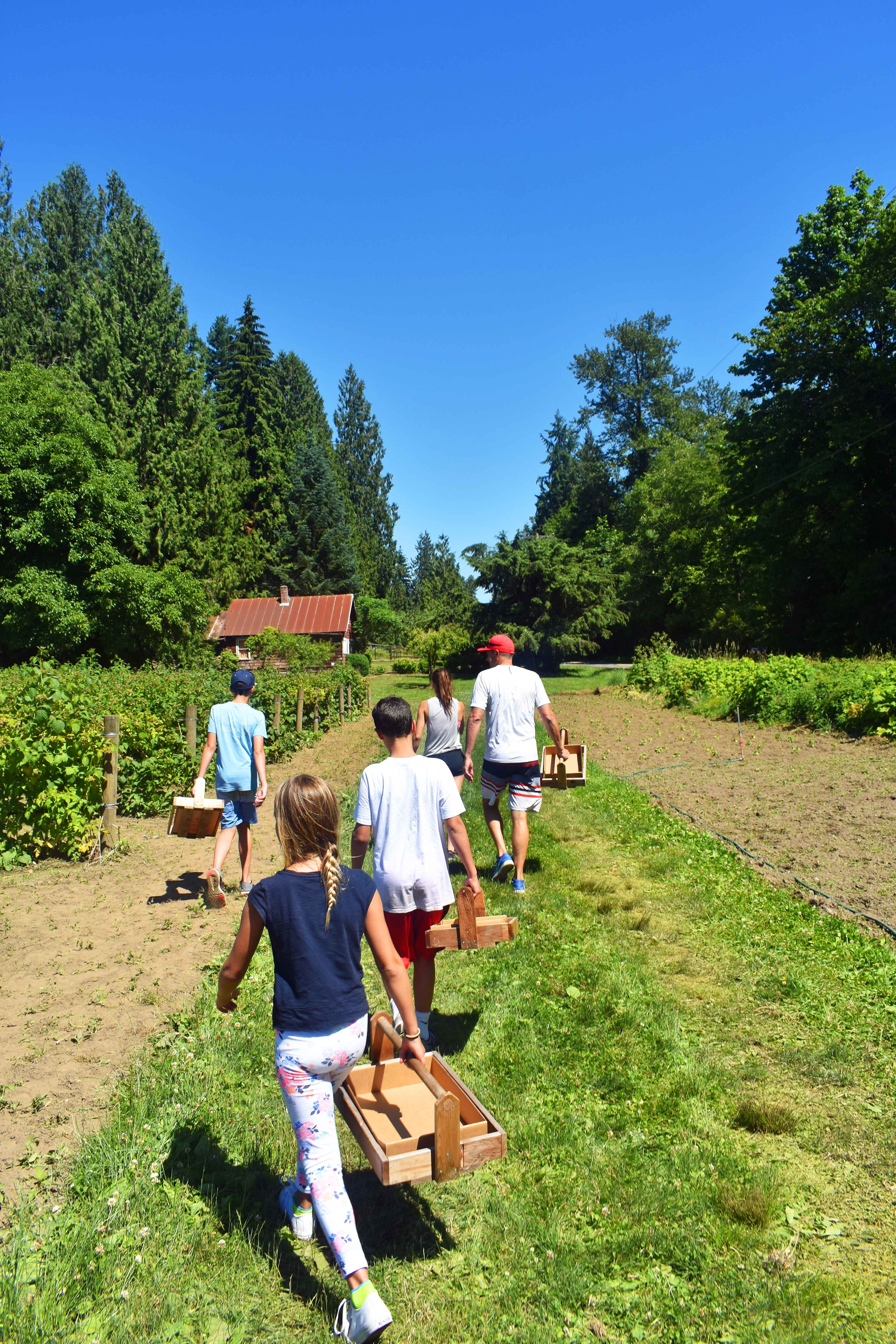 Berry Picking in Carnation Washington at Remlinger Farms. Best Places to Eat and See in Seattle. The most popular spots to visit and the best restaurants. Tips on the best places to see in Seattle Washington. www.modernhoney.com